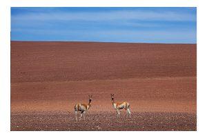 Simetria no Deserto